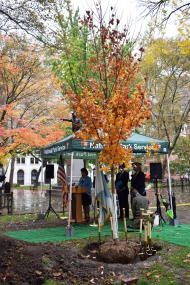 The 76 trees to be planted will include a variety of species, all historically accurate to 18th century Philadelphia. While the first of the trees will be planted in the park directly behind Independence Hall, others will be scattered throughout the 55 acres of the park, planted over the course of several years, anticipating a mature canopy in time for the nation's Semiquincentennial celebrations in 2026.